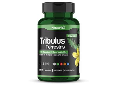 tribulus-chines